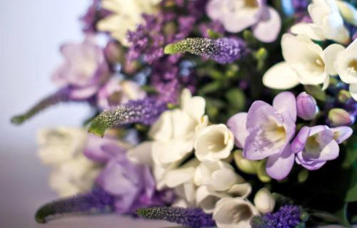 UF-Flowers